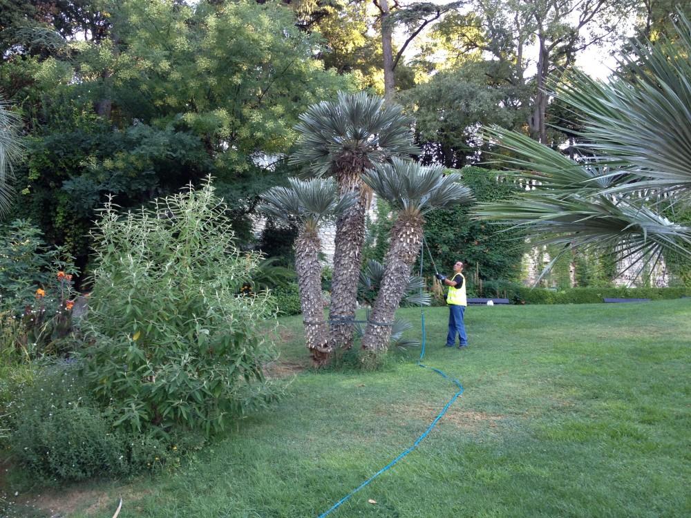 traitement palmier avec lance